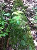 Nature22