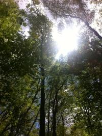 Nature33